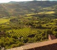 Indulgent Italy Tours 2019 - 2020 -  Vineyards of Montepulciano