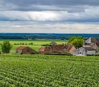 Paris and the Wines of Bordeaux & Burgundy Tours 2019 - 2020 -  Chablis Wine Tour