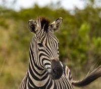 Best of Rwanda  in Style Tours 2020 - 2021 -  Zebra