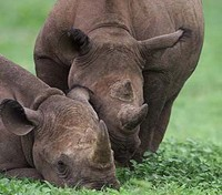Kenya Highlights Tours 2017 - 2018 -  Rhino