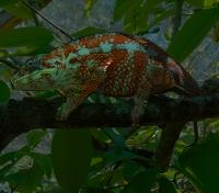 Lemurs & Beach Exclusive Tours 2018 - 2019 -  Night Walk: Chameleon
