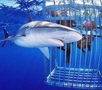 Elite South Africa Tours 2019 - 2020 -  Shark Cage Diving