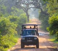 Authentic Sri Lanka: Wildlife & Locals Tours 2018 - 2019 -  Jeep Safari