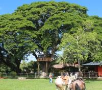 Culinary Delights & Cultural Encounters Tours 2018 - 2019 -  El Respiro Eco-Lodge Farm