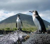 Santa Cruz Island Tours 2017 - 2018 - Galapagos Safari Camp - Wildlife