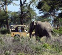 Kilimanjaro Tours 2017 - 2018 -  Game Drive with Elephants