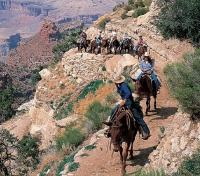 Grand Canyon National Park Tours 2017 - 2018 - Mule Rides at the Grand Canyon