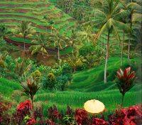 Bali Tours 2017 - 2018 -  Rice Terraces View