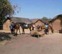 Isalo National Park Tours 2017 - 2018 - Horse Rides