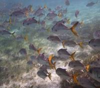 Belize Cayes Tours 2017 - 2018 - Tropical Fish