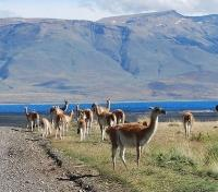 Torres del Paine Tours 2017 - 2018 - Excursions
