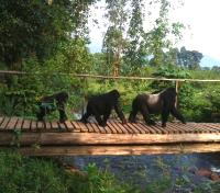 Bwindi Tours 2017 - 2018 - Gorilla Tracking