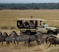 Manyara Tours 2017 - 2018 - Manyara Ranch Conservancy - Game Drive
