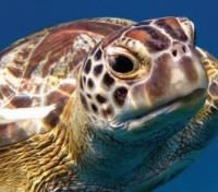 Ponta do Ouro Tours 2017 - 2018 - Turtle