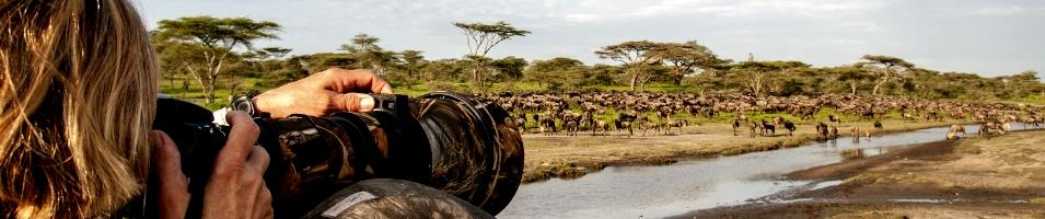 Serengeti Migration Safari Tours 2019 - 2020 -  Migration