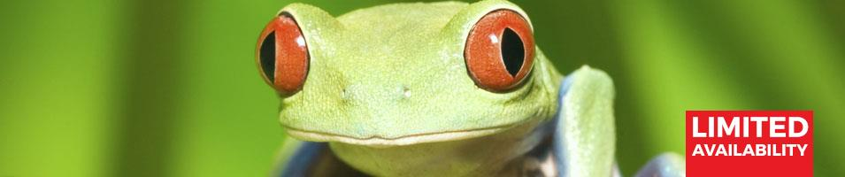 Costa Rica Christmas Adventure Tours 2017 - 2018 -  frog banner