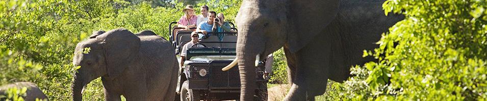 South Africa Cape & Kruger Safari Tours 2017 - 2018 -  South Africa