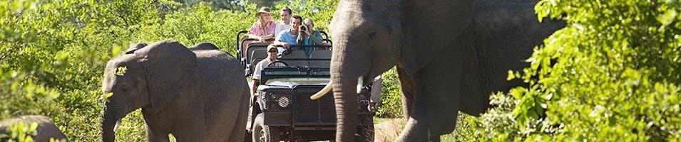 Cape Town & Kruger Safari  Tours 2019 - 2020 -  Safari