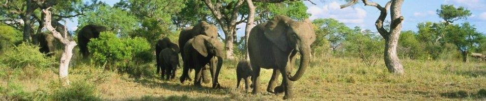 Zimbabwe Game Tracker - The Road Less Travelled Tours 2017 - 2018 -  Zimbabwe Elephants