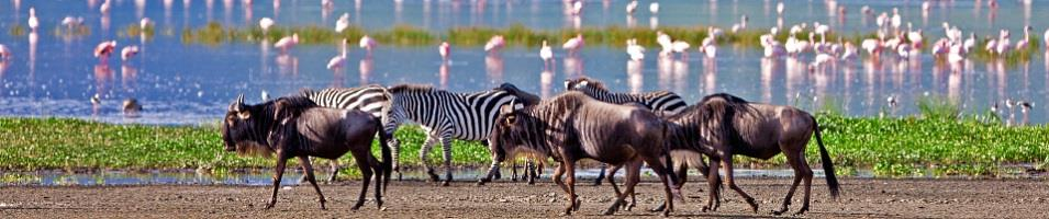 Kenya & Tanzania Signature Safari Tours 2017 - 2018 -  Life deep in the Ngorongoro Crater