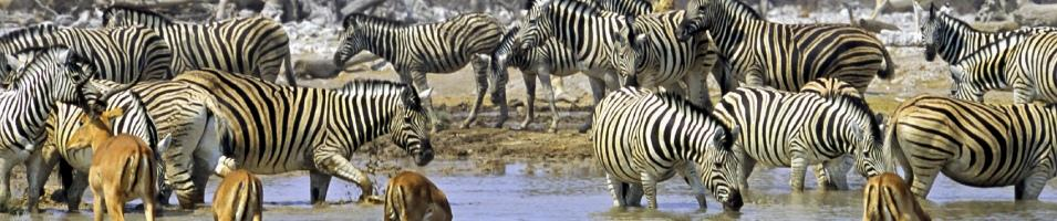Namibia Exclusive Tours 2017 - 2018 -  Etosha Watering whole