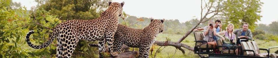 South Africa Wildlife Tracker Tours 2017 - 2018 -  Leopard Party