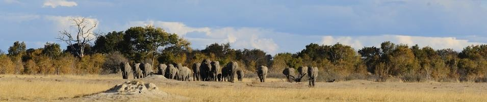 Zimbabwe Explorer  Tours 2019 - 2020 -  Herd of Elephants