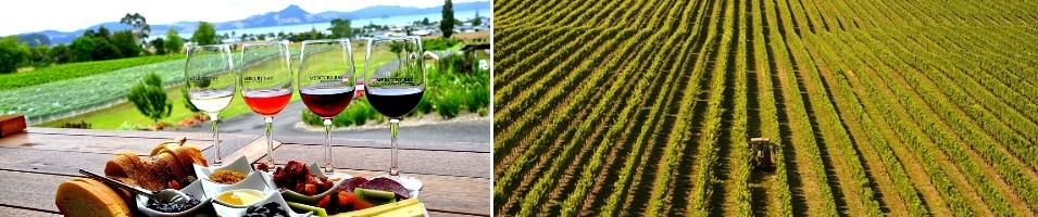 New Zealand Wine Tour Tours 2017 - 2018 -  New Zealand