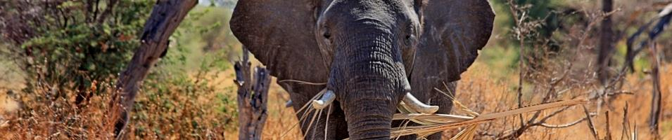Best of Southern Africa Tours 2019 - 2020 -  South Africa
