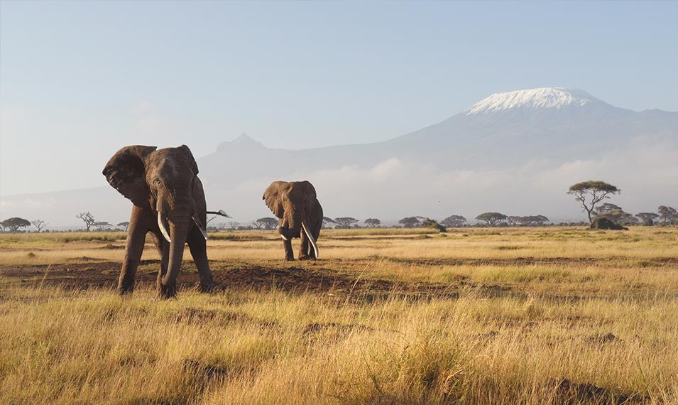 Get up close and personal with elephants and see amazing views of Mount Kilimanjaro in Amboseli.