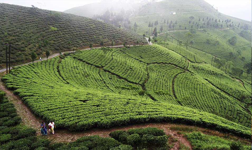 Hike through hills of tea and spice plantations.