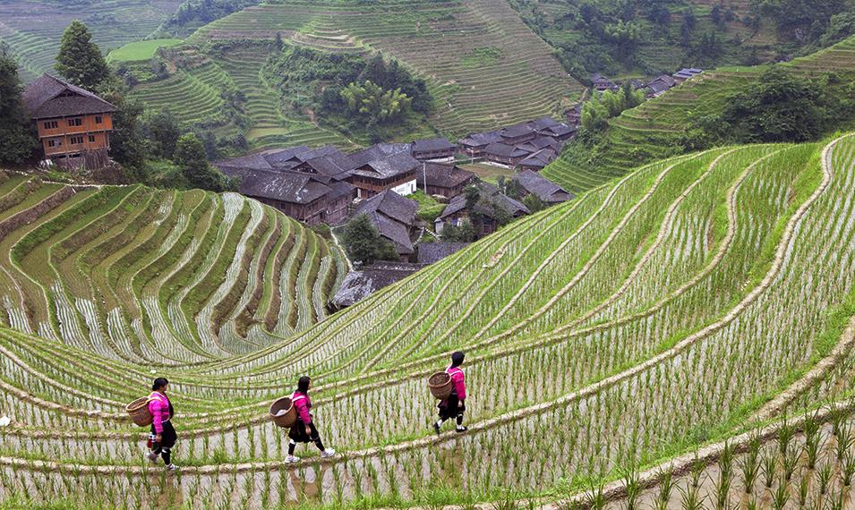 Explore Longsheng - China's off-the-beaten-track rice paddies.