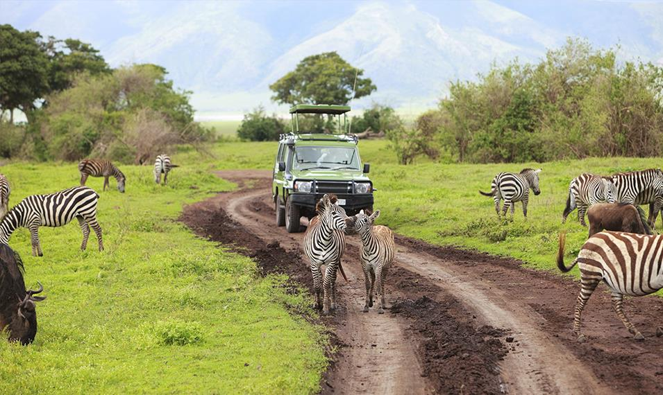 Descend into Ngorongoro Crater and search for wildlife.