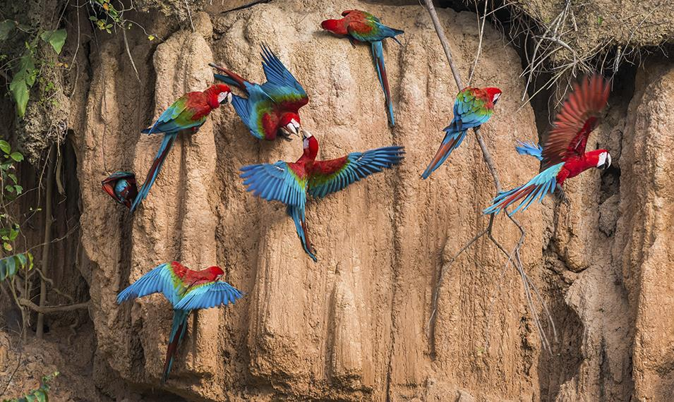 Search for colorful wildlife in the Amazon.