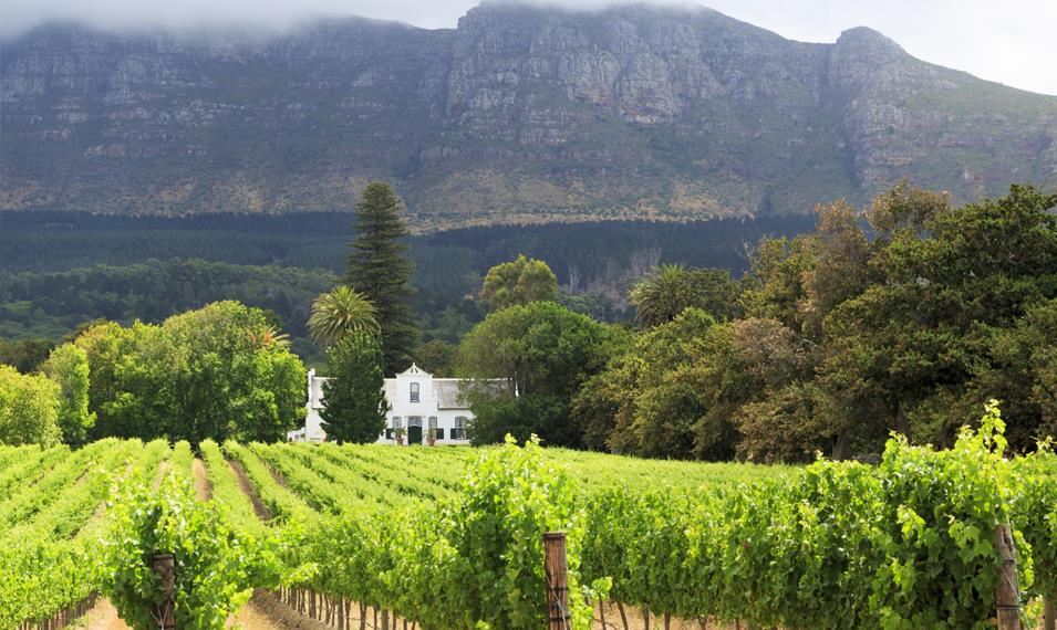 Enjoy winery tours and tastings in Stellenbosch.