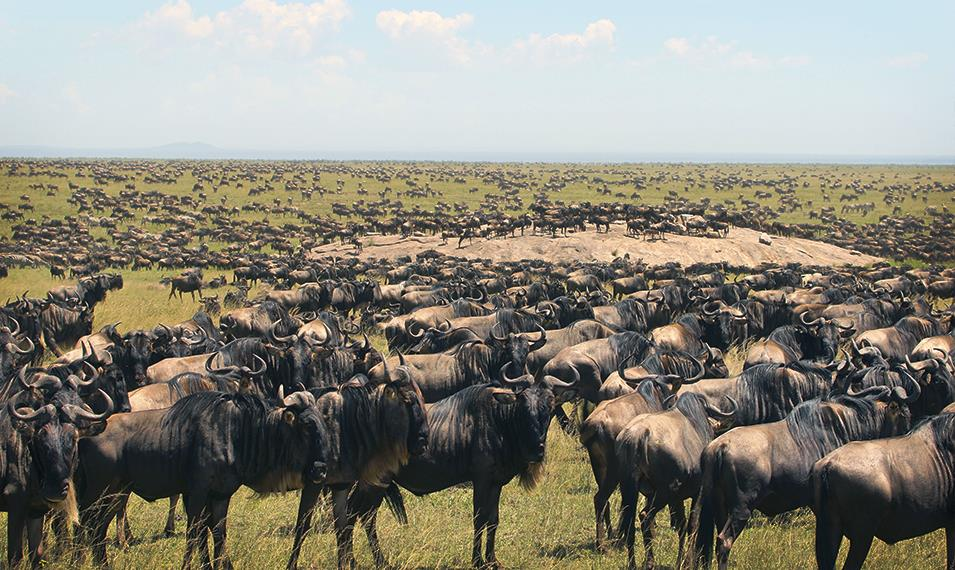Witness the spectacle that is the Great Migration.
