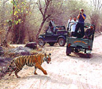Ganges, Tigers & Taj Signature Tours 2018 - 2019 -  Ranthambore