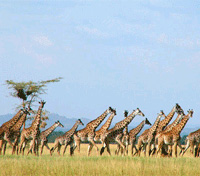 Kenya Active Adventure Tours 2019 - 2020 -  Kenya Samburu