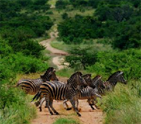 South Africa Wildlife Tracker Tours 2017 - 2018 -  South Africa Kapama Private Game Reserve