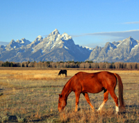 Grand Teton & Yellowstone National Parks Tours 2020 - 2021 -  Jackson Hole
