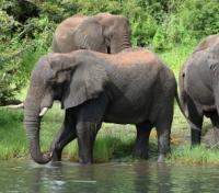 Victoria Falls to the Okavango Delta Tours 2019 - 2020 -  Elephants at Chobe National Park