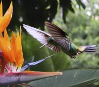 Costa Rica Highlights Tours 2017 - 2018 -  Hummingbird