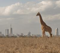 Kenya Active Adventure Tours 2019 - 2020 -  Nairobi in the Distance