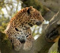 Authentic Sri Lanka: Wildlife & Locals Tours 2018 - 2019 -  Yala National Park