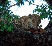 Kruger, Vic Falls & Hwange Safari Highlights Tours 2019 - 2020 -  South Africa Sabi Sands