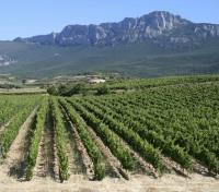 Spain Exclusive Honeymoon Tours 2019 - 2020 -  La Rioja Vineyards