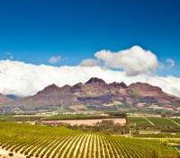 Cape Town, Winelands & Safari  Tours 2020 - 2021 -  Stellenbosch Wineland