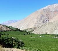 Celestial Chile: Under the Southern Cross Tours 2019 - 2020 -  Vineyards in Elqui Valley